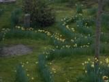 jardin_le_mans_24h_course_b&b